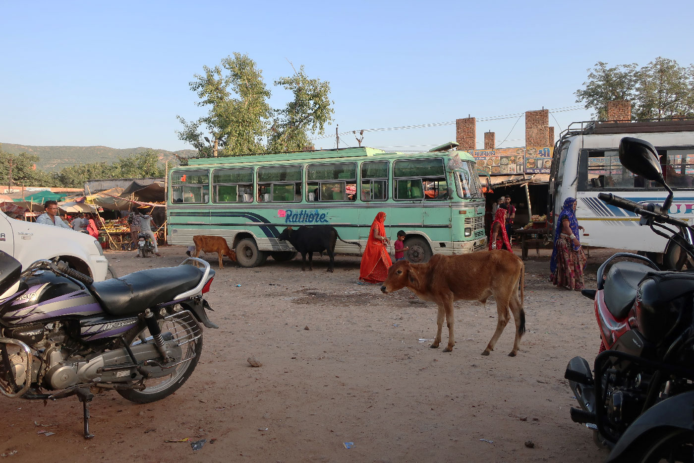 pushkar-bus-cow